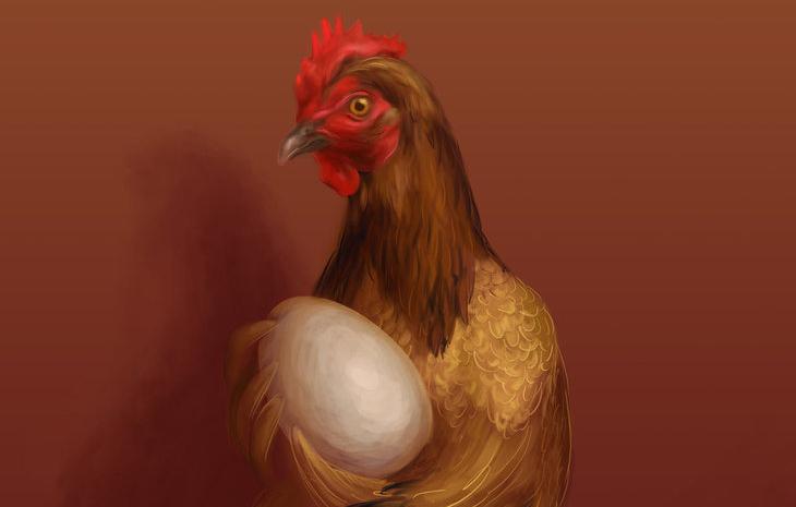 Risultati immagini per la gallina che starnazza