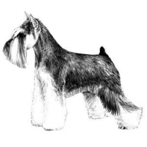 Miniature Schnauzer Breed Standard Icon For Reberstein's Miniature Schnauzers