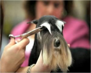 Reberstein's Professional Grooming