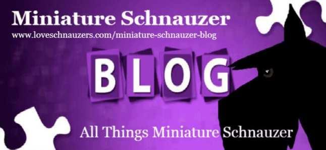 Reberstein's Miniature Schnauzers Blog Logo