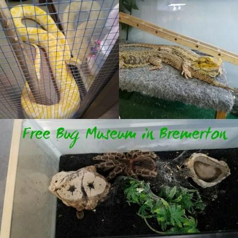 free bug museum bremerton