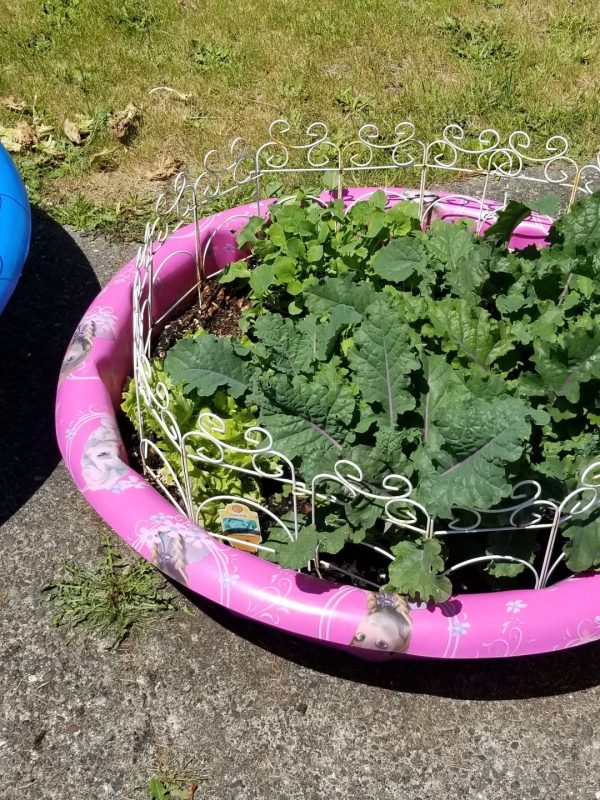 One Man's Trash is Another Man's Treasure: Kiddie Pool Garden