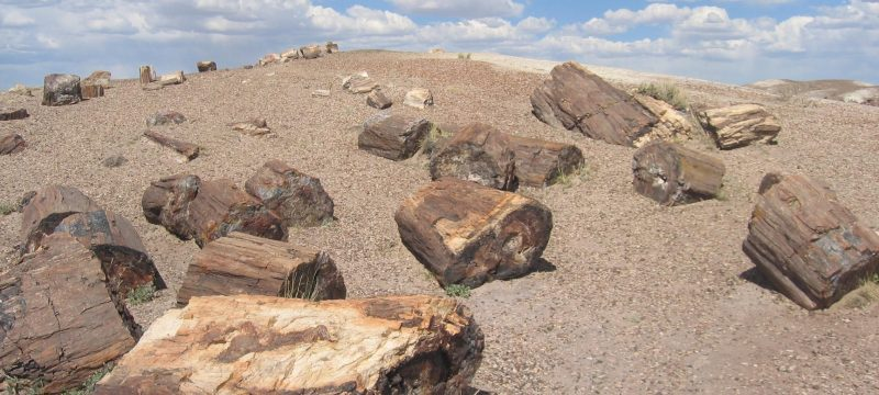 Backpacking in Petrified Forest National Park