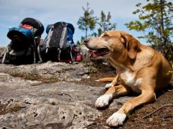 Best Places to Go Backpacking with Dogs