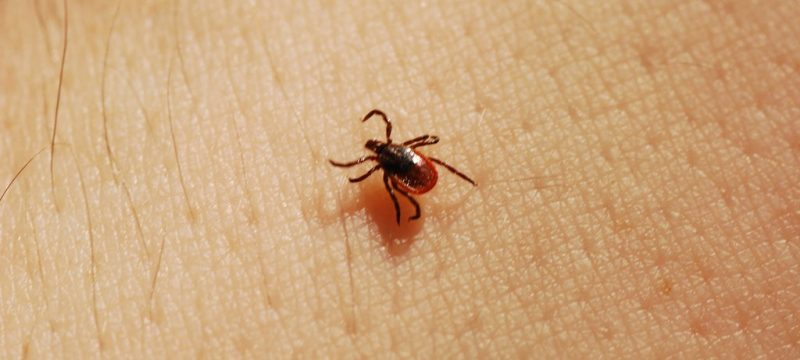 Avoiding Ticks While Backpacking