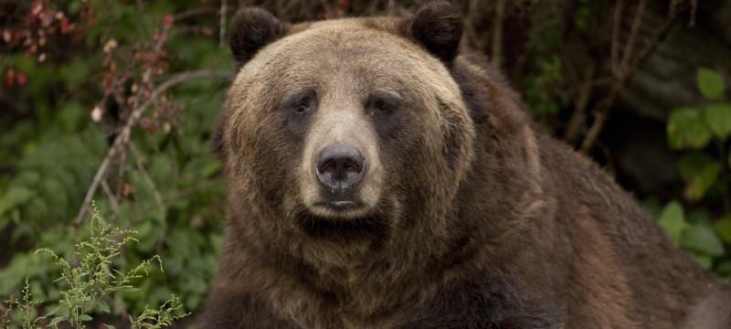bear, bears, hiking, errors, mistakes, trail