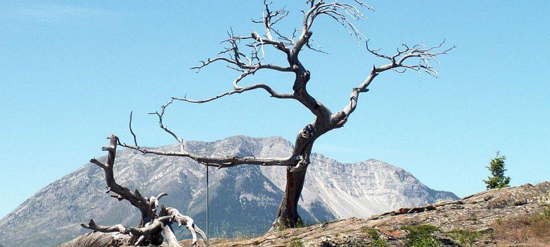 Burmis tree, hikes, tree, trees