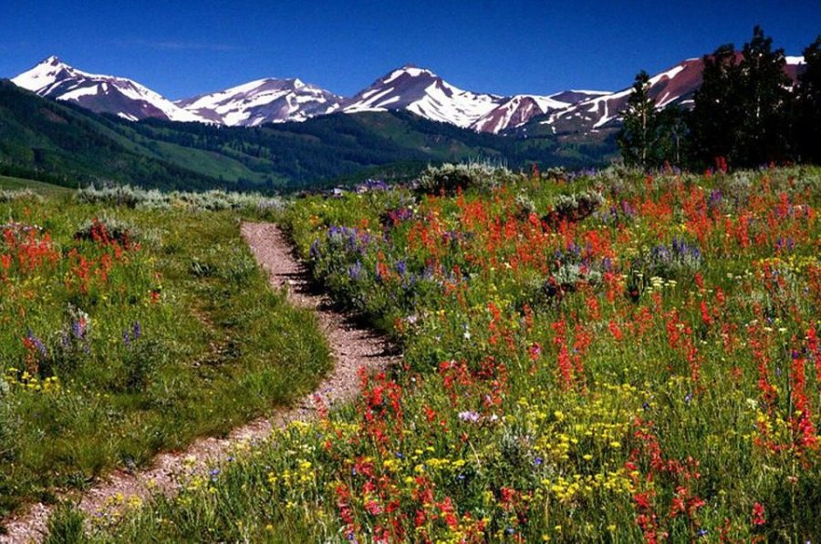wildflowers, spring, day hikes