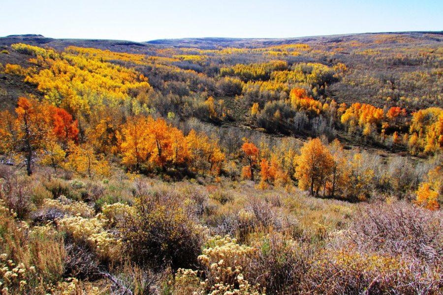 fall foliage, fall, autumn, hikes