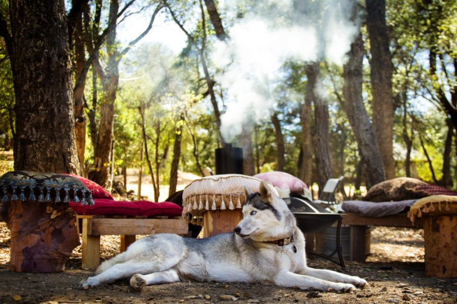 take your dog winter camping