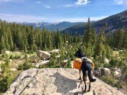The Savvy Hiker