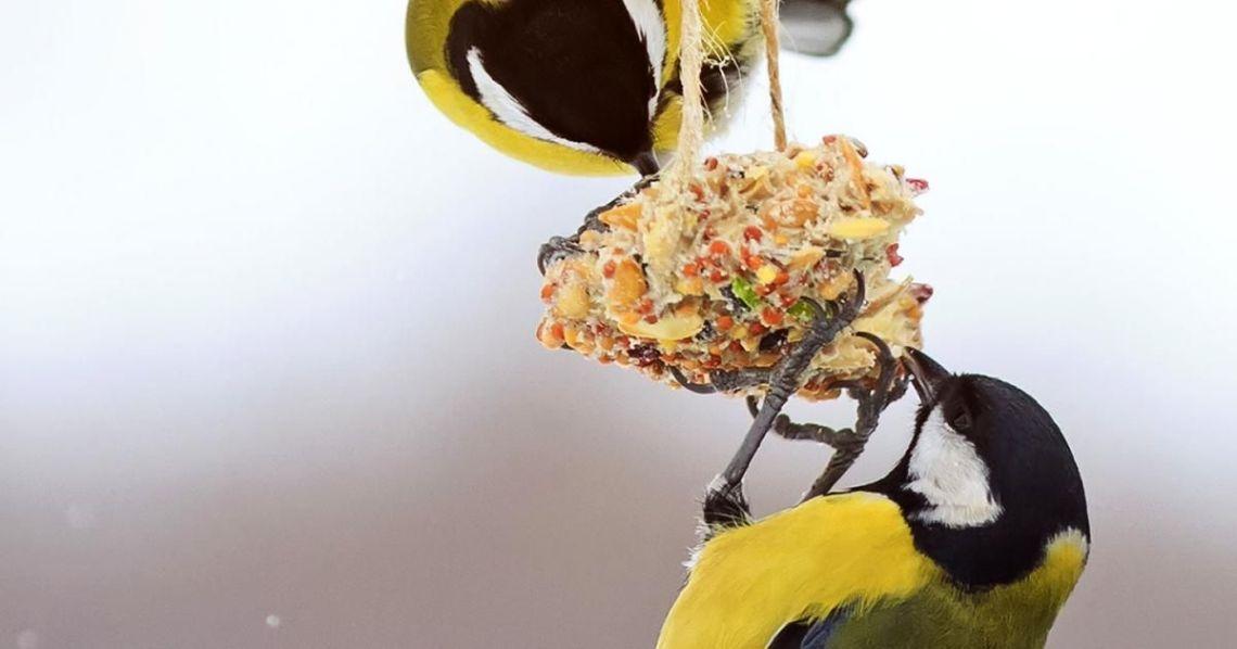 Wild Bird Food Recipes Lovethegarden