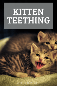 Read more about the article Kitten Teething: Process, Symptoms, & Tooth Age Diagram