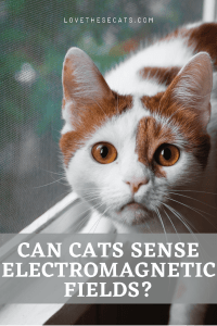 Read more about the article EMF Effects on Cats & 3 Ways to Protect Against Them