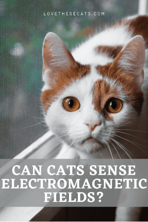 EMF Effects on Cats & 3 Ways to Protect Against Them