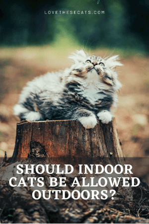 Should Indoor Cats be Allowed Outside Unsupervised?