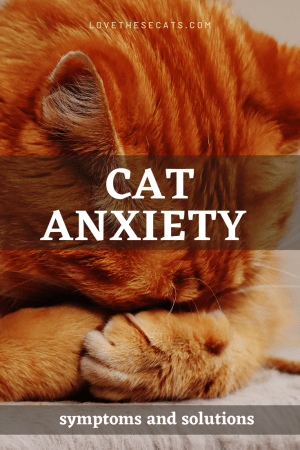 5 Strategies to Relieve Cat Anxiety & Aggression