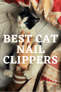 Read more about the article Best Cat Nail Clippers