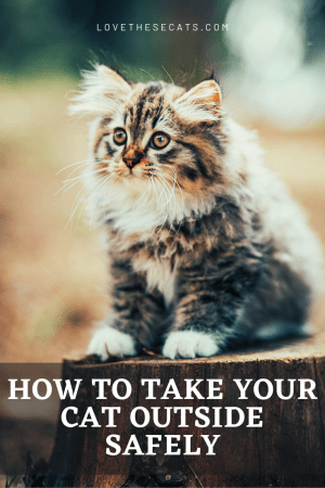 Why and How to Take Your Cat Outside