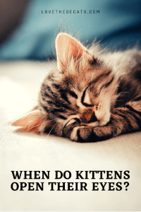 Read more about the article When do kittens open their eyes?