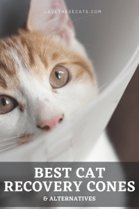Read more about the article Best Cat Cones & Alternatives
