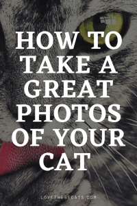 Read more about the article How to Photograph Cats