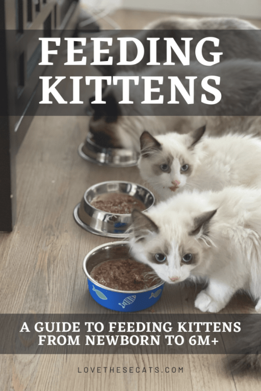 Feeding kittens from newborn to 6 months and older
