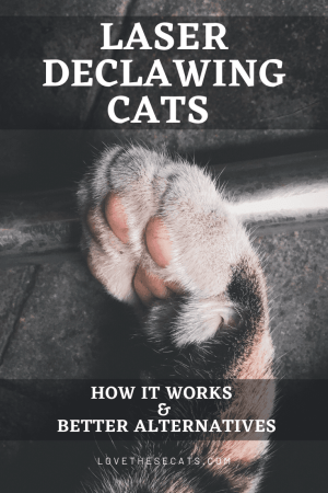 Laser Declawing Cats: How it works & Better Alternatives