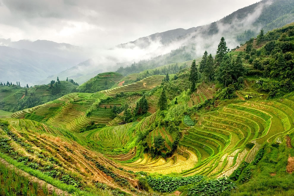 Rice Terraces in Longsheng near Guilin China
