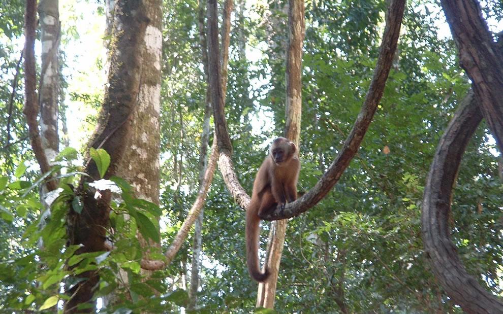 Amazonian Rainforest, Monkey Island (Peru)