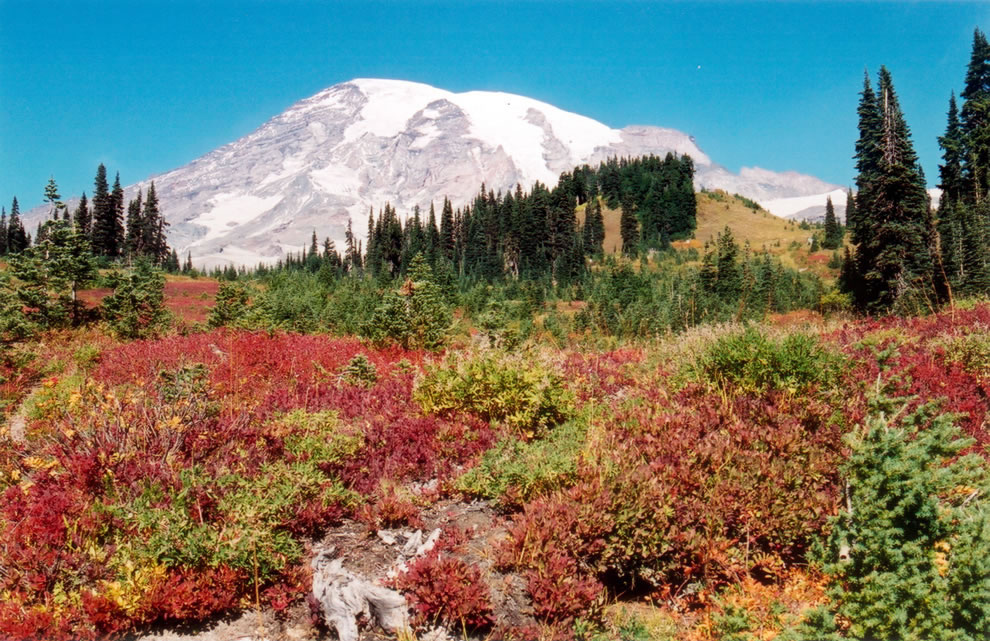 Autumn view of Mount Rainier from Paradise