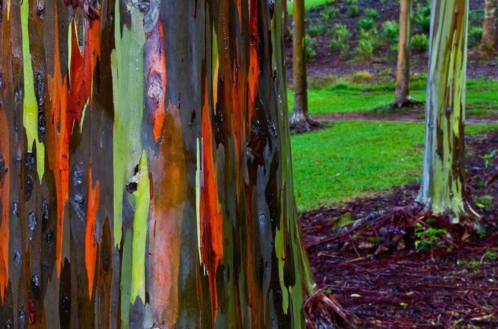 Stunning Hawaiian treescapes