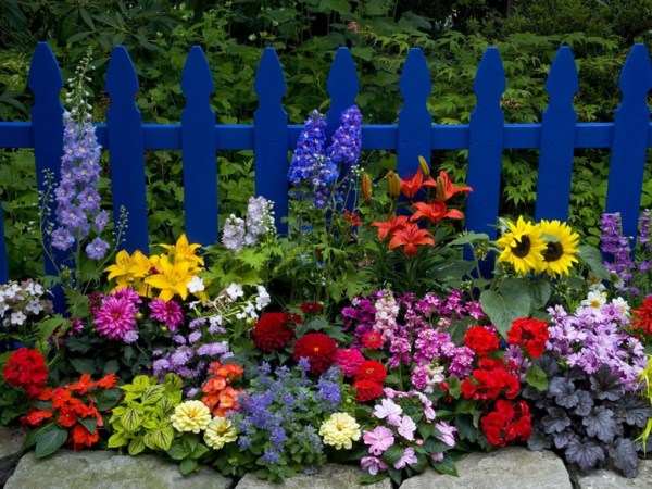 beautiful flower gardens pinterest Beautiful Flower Garden Pictures, Photos, and Images for