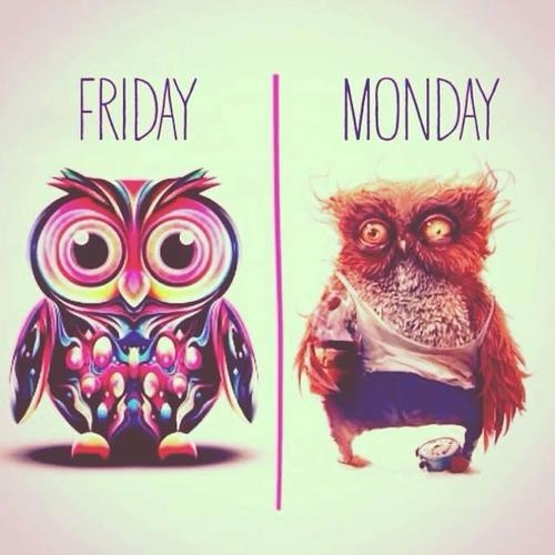 Friday and then monday