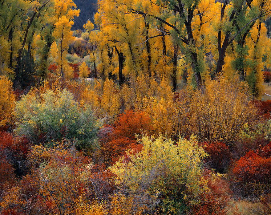 Autumn In Idaho Pictures Photos And Images For Facebook