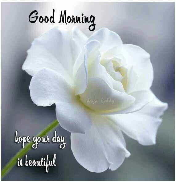 Good Morning Hope Your Day Is Beautiful Pictures Photos