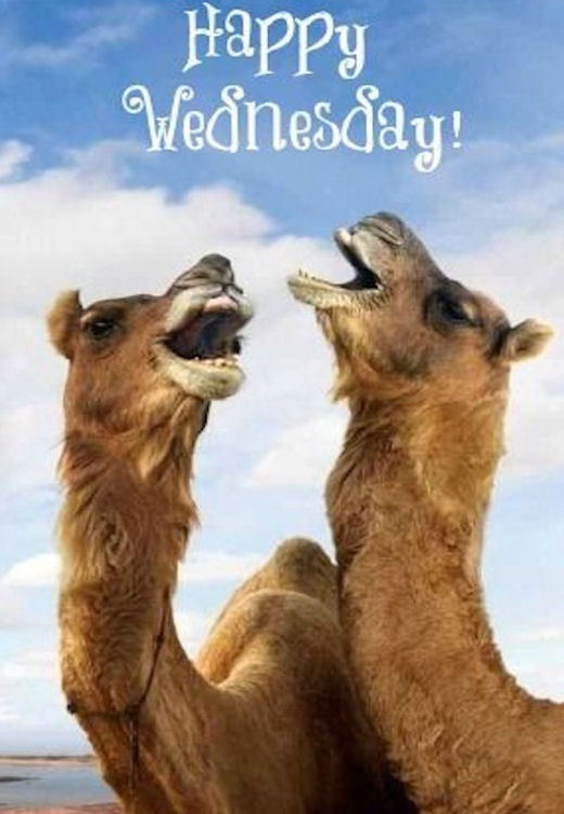 Funny Quotes Hump Wednesday Day