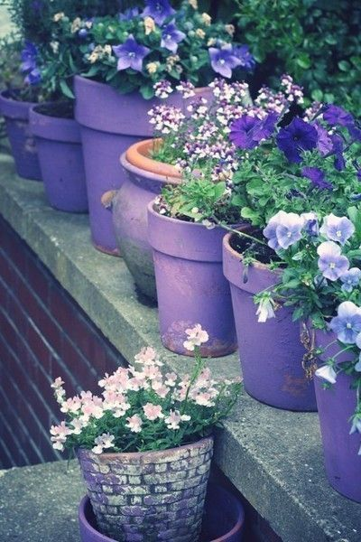 Use them in commercial designs. Purple Flowers In Purple Planters Pictures, Photos, and