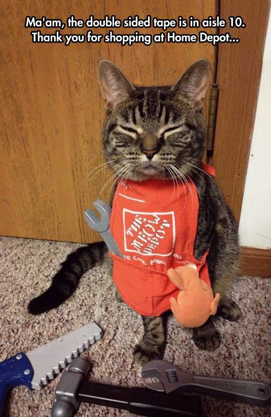 Home Depot Cat Pictures, Photos, and Images for Facebook ...