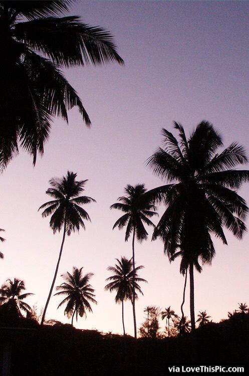 Palm Trees At Sunset Pictures Photos And Images For