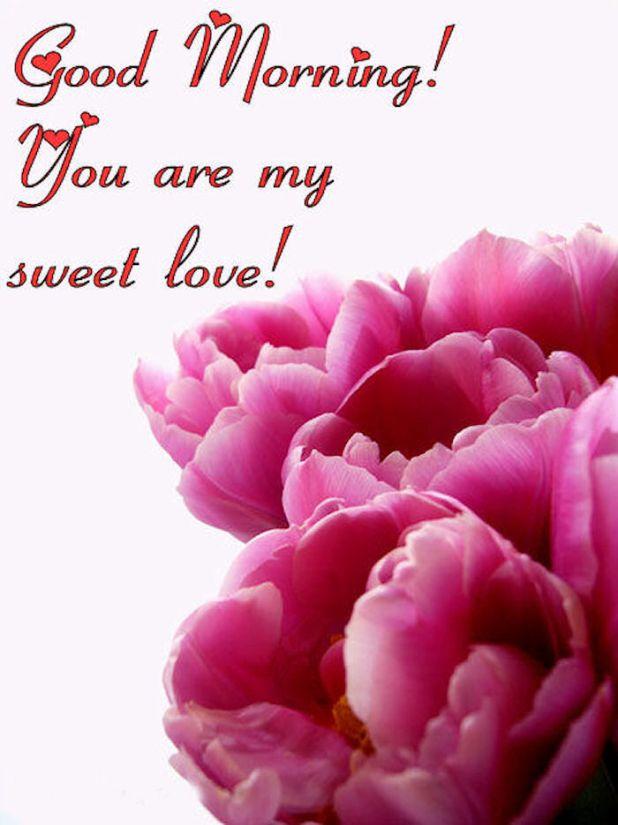 Good Morning My Love Full Hd Wallpaper Wallpaper sportstle