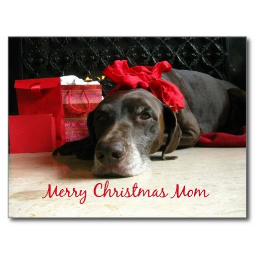 Dog Wished Moms A Merry Christmas Pictures Photos And