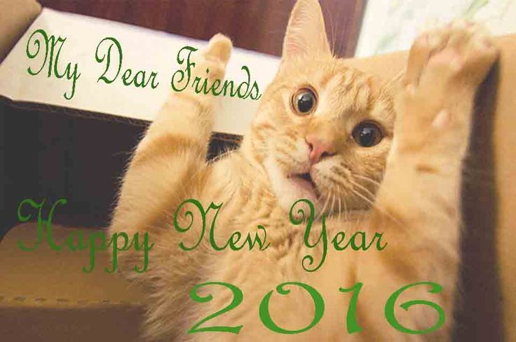 Happy New Years From The Kitty Cat Pictures Photos And