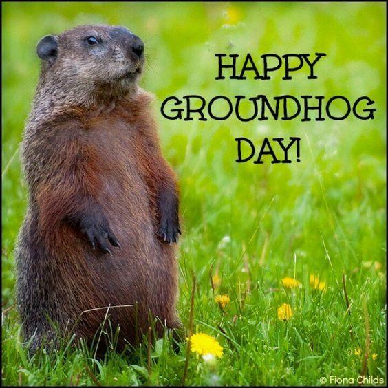 Funny Groundhog Clip Art