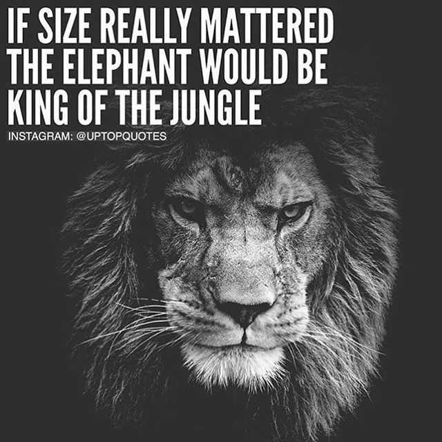 If Size Really Mattered The Elephant Would Be The King Of