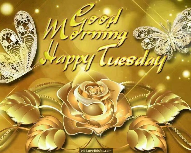 Good Morning Happy Tuesday Gold Rose Image Quote Pictures