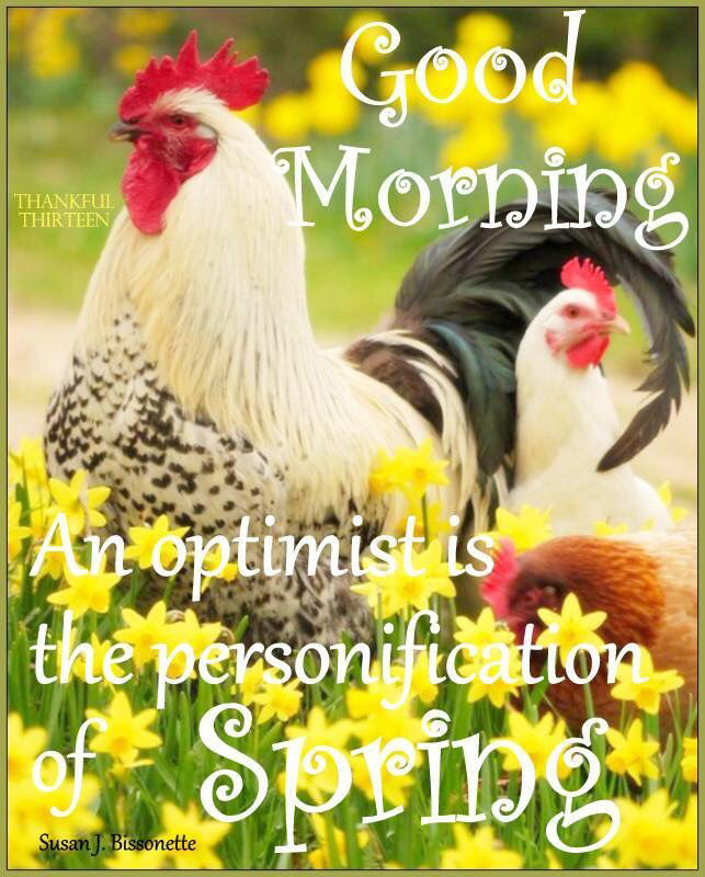 Spring Good Morning Quote Pictures Photos And Images For