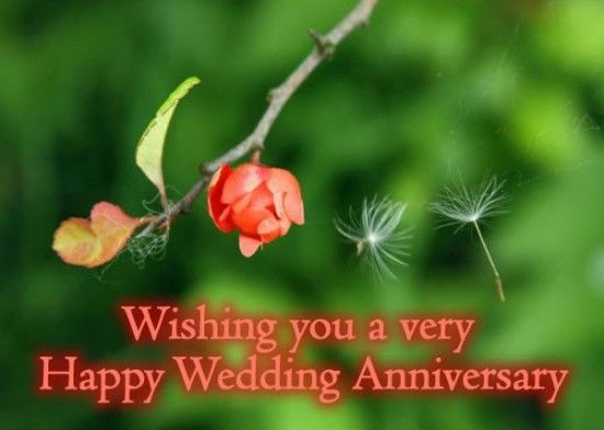Wishing You A Very Happy Wedding Anniversary Pictures Photos And Images For Facebook Tumblr