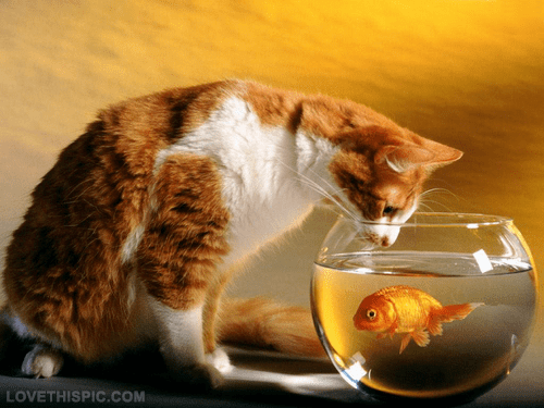 Cat And Goldfish Pictures Photos And Images For Facebook