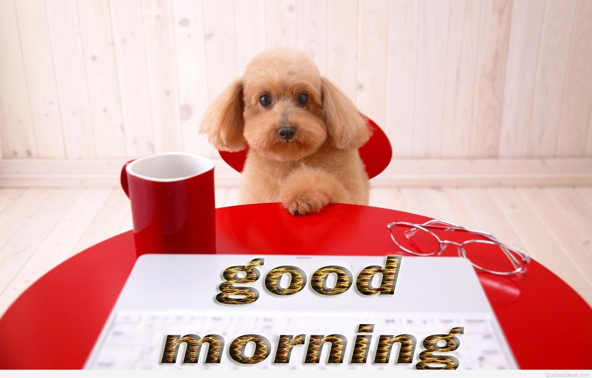 Dog Funny Good Morning Winter